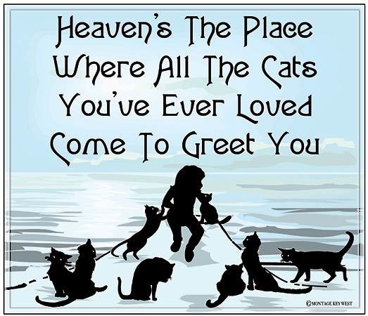 """HEAVEN'S THE PLACE WHERE CATS * 8"""" x 10"""" 10660"""