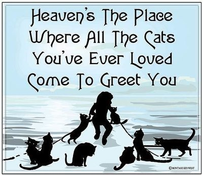 """HEAVEN'S THE PLACE WHERE CATS * 8"""" x 10"""""""