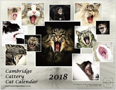2018 Cambridge Cattery Cat Calendar