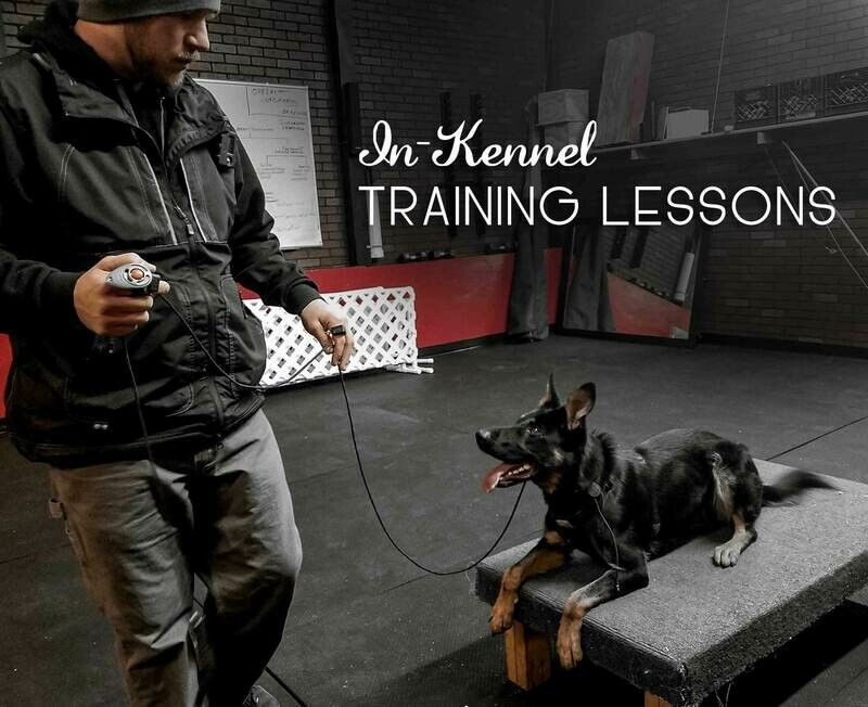 Training Lessons (In-Kennel)