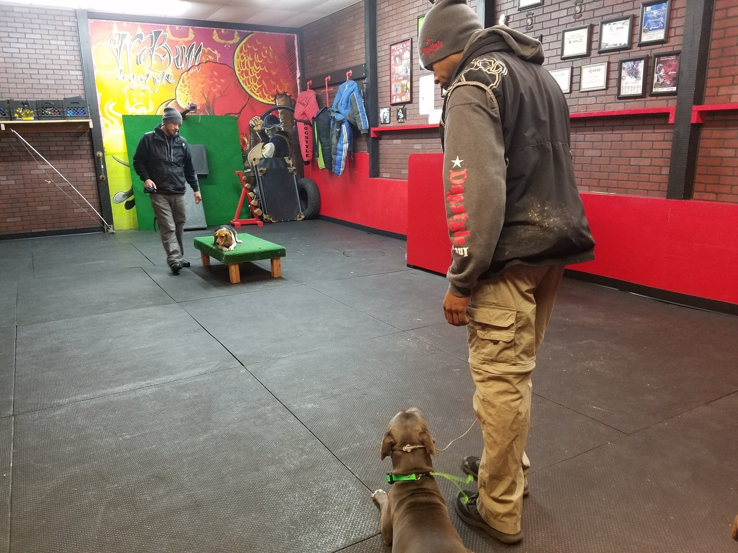 Training Consultation Fee (In Kennel)