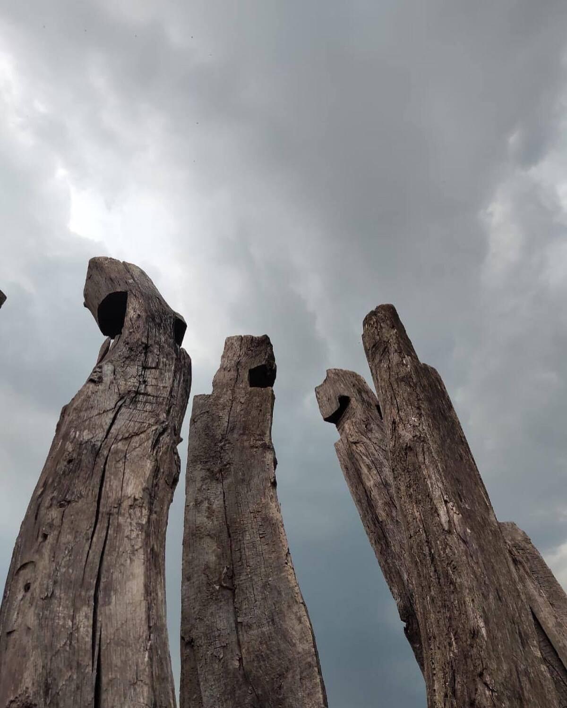 Древние АРТЕФАКТЫ старого дуба Каждый Предмет этого СОБРАНИЯ достоин внимания и обсуждения