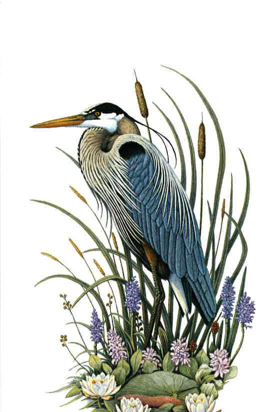 Great Blue Heron by James R. Darnell (limited edition print)