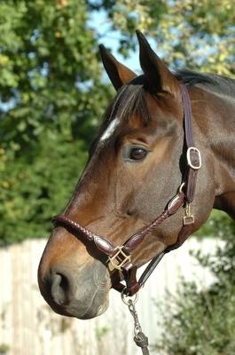 braided leather headcollar - Pony