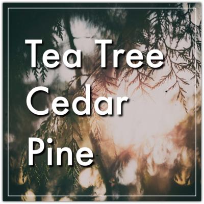 Tea Tree & Cedar Bar Soap