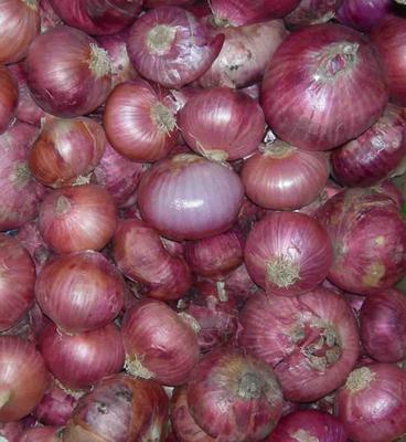 Bawang Merah 1 Kg