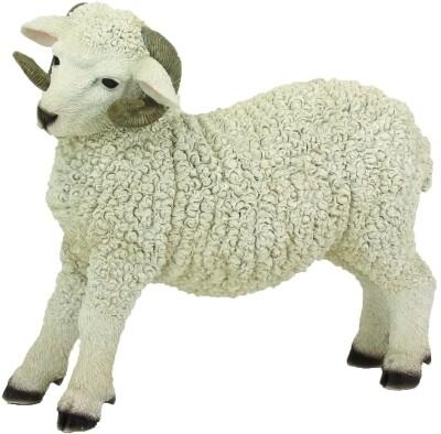 Ram 35x15x31