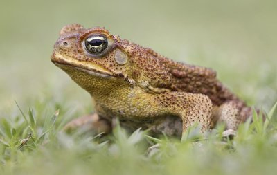 Adopt A Toad