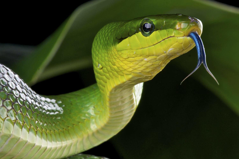 Adopt A Snake