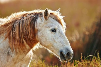 Adopt A Horse