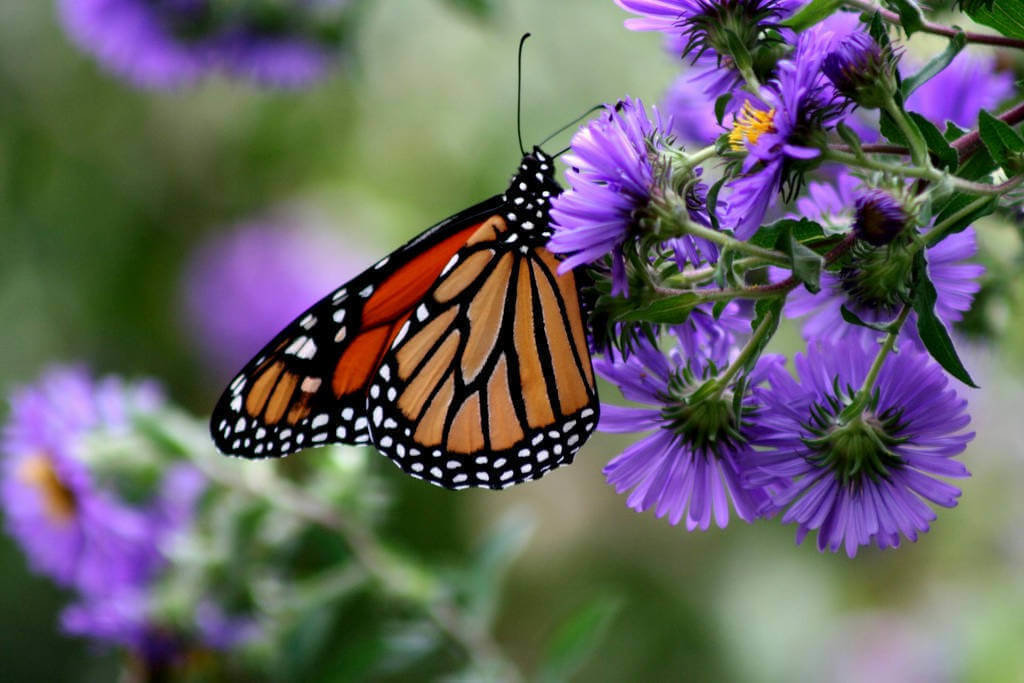 Adopt A Butterfly