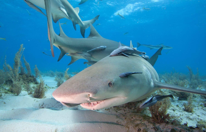 Adopt A Shark
