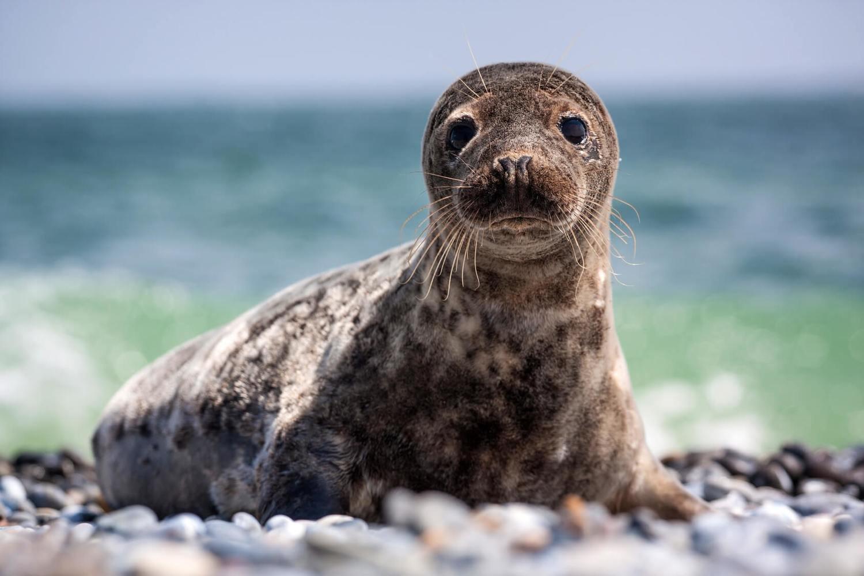 Adopt A Seal