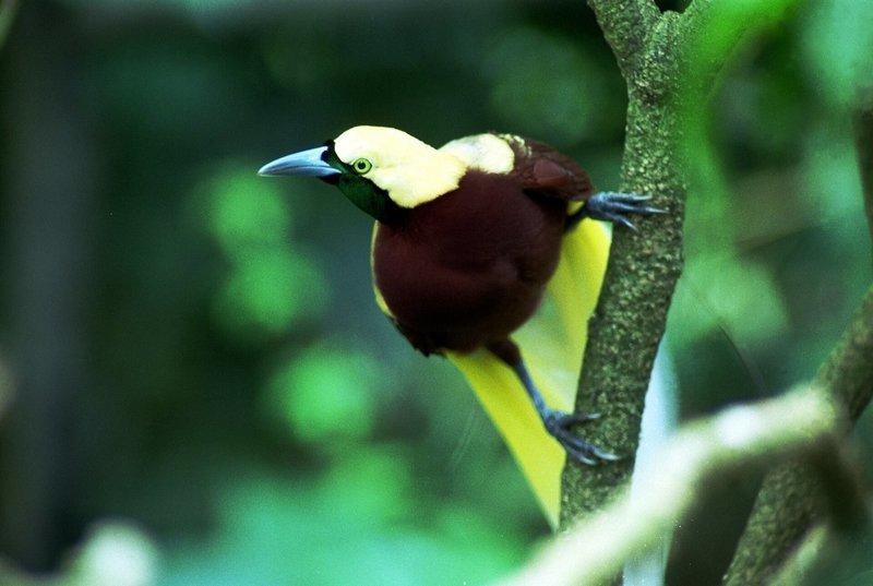 Adopt A Bird Of Paradise