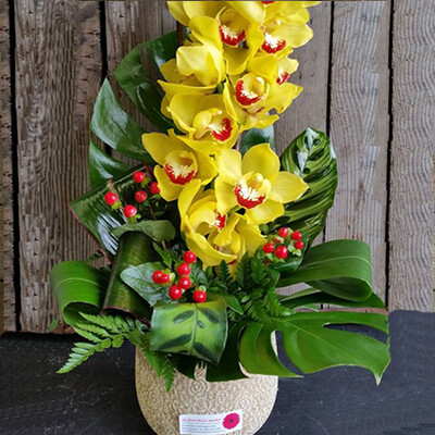 Cymbidium Orchid in Ceramic Pot