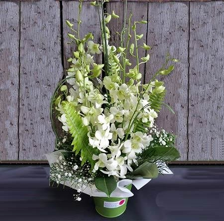 Orchid Arrangement in Bucket