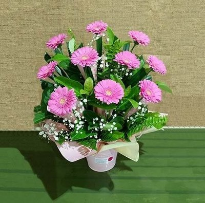 Mini Gerbera Arrangement in Bucket