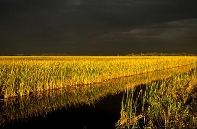 SALE Approaching Storm, Everglades, Wayne Eastep