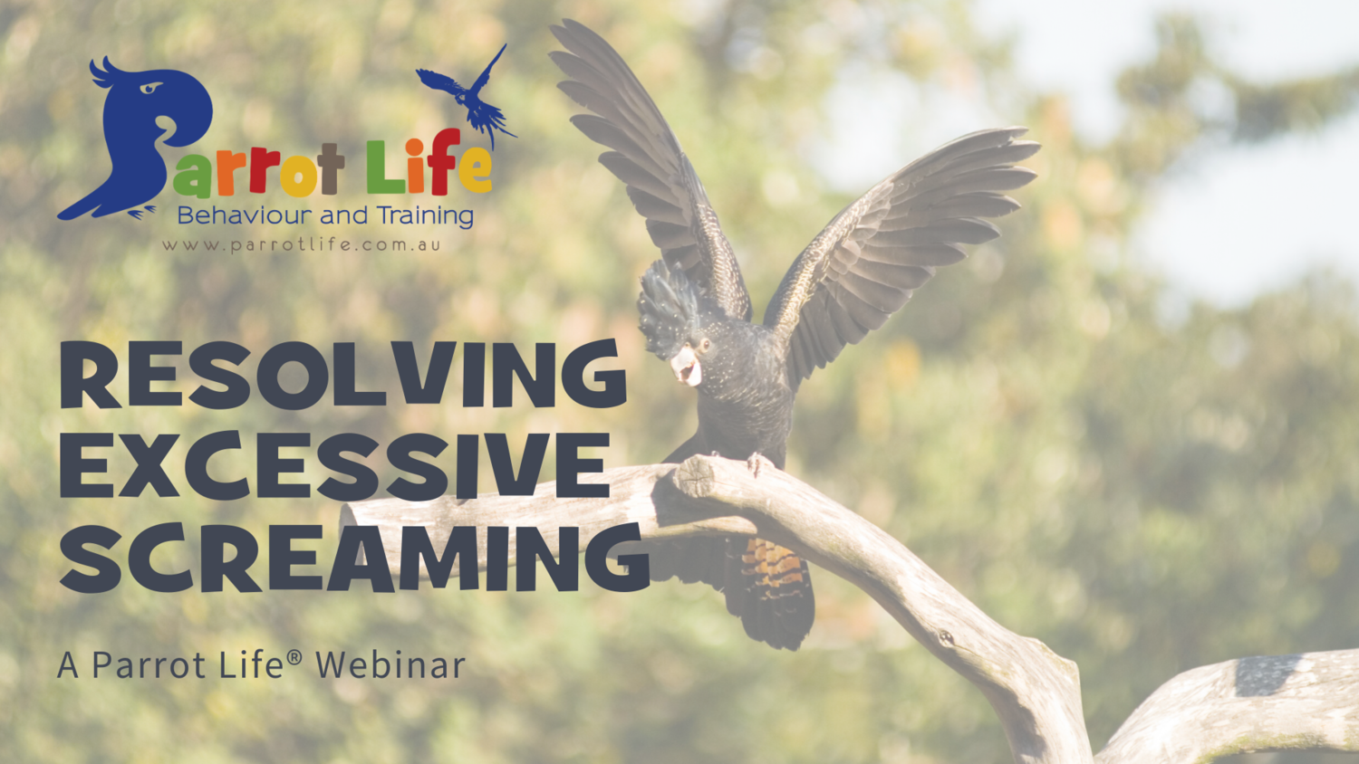 Resolving Excessive Screaming Webinar - 'On Demand'