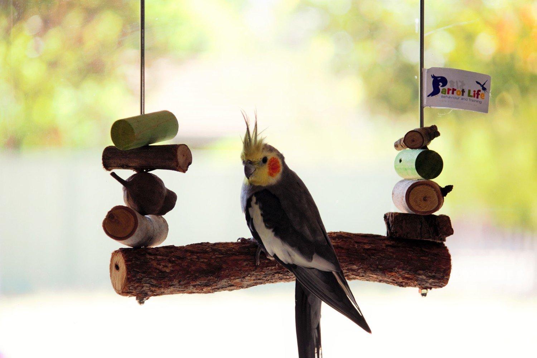 Natural Perch Swing MEDIUM