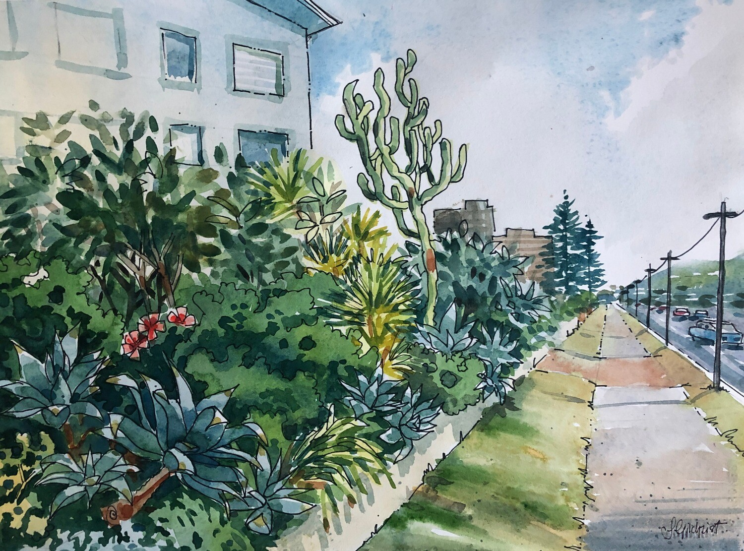 PAINTING for Sale: Pittwater Road, Collaroy, Garden.  -  Medium 1/4sheet original watercolour by Jenny Gilchrist