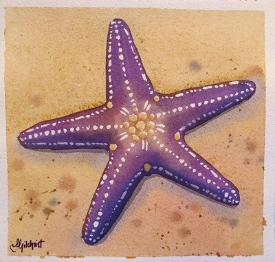 PAINTING for Sale: Purple Starfish - small original watercolour by Jenny Gilchrist