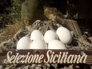 Uova Fertili Gallina Siciliana