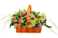 Peace Basket