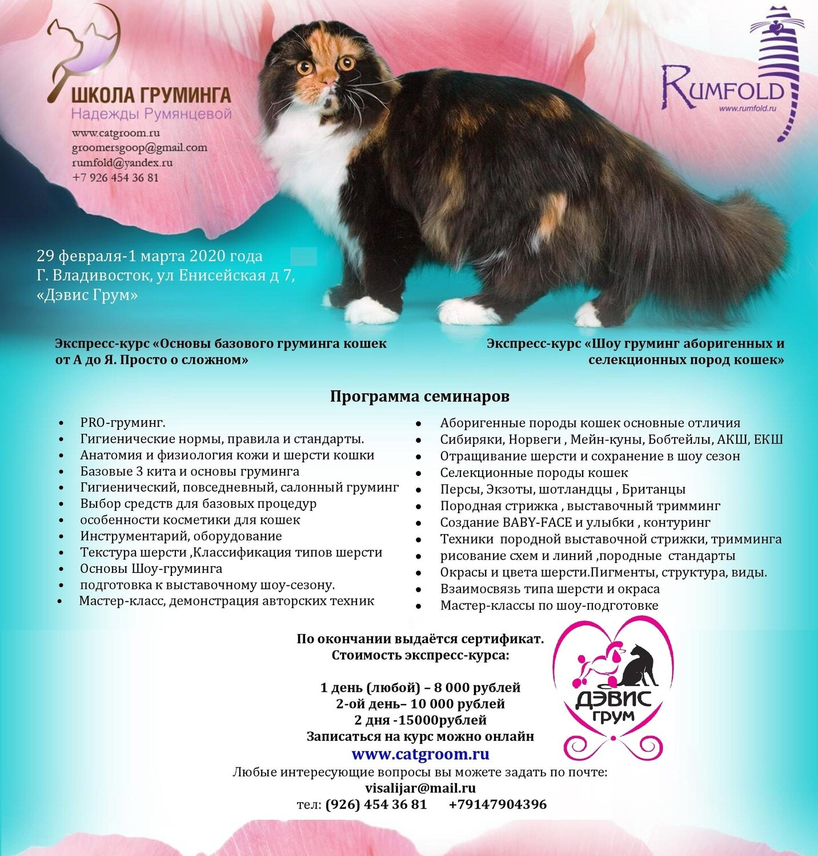 экспресс курс по грумингу кошек  29 февраля- 1 марта  2020