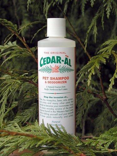 CEDAR-AL Cedar Shampoo