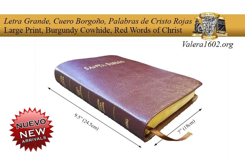 Letra Grande Burdeos / Large Print Burgundy