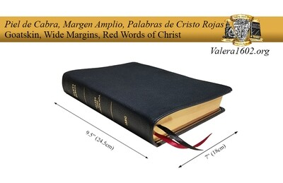 Margen Amplio (Cabra) / Wide Margin (Goatskin)