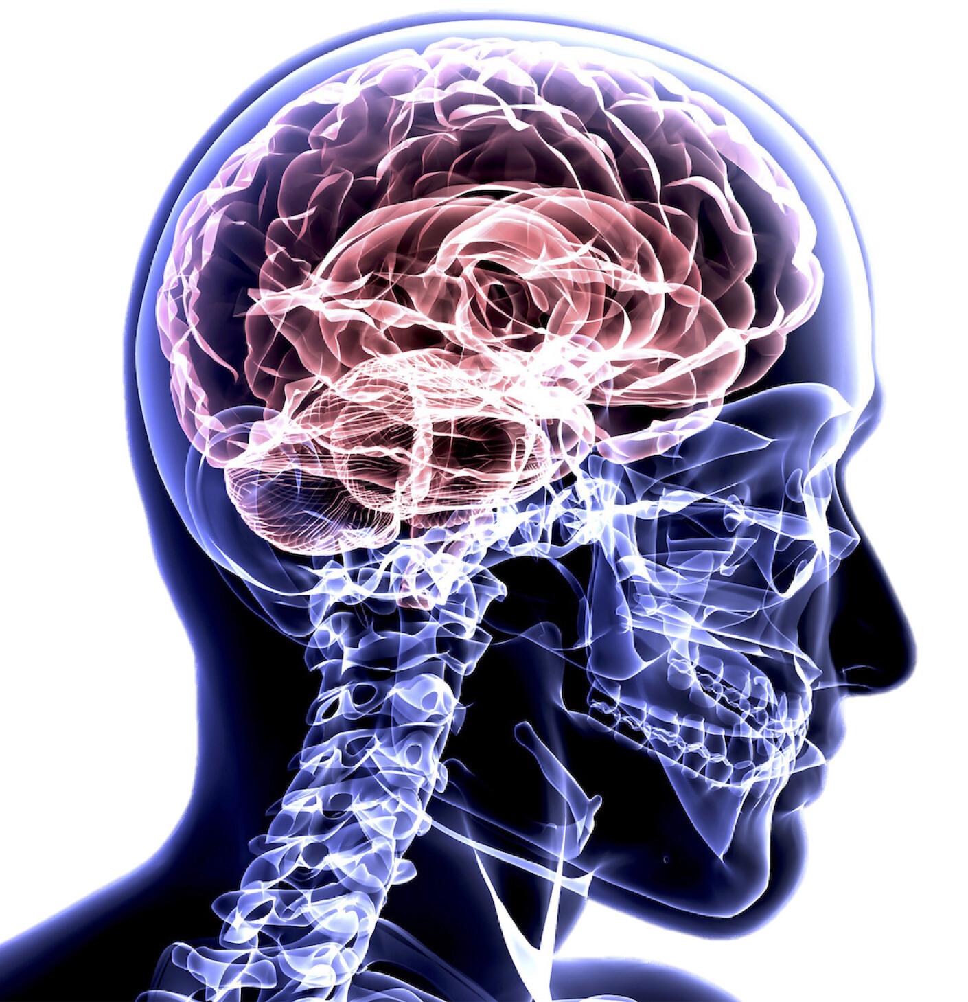 National Undergraduate Neuroanatomy Competition 2021