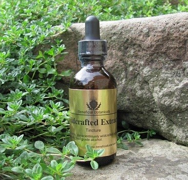 Reishi Mushroom Tincture Dual Extraction