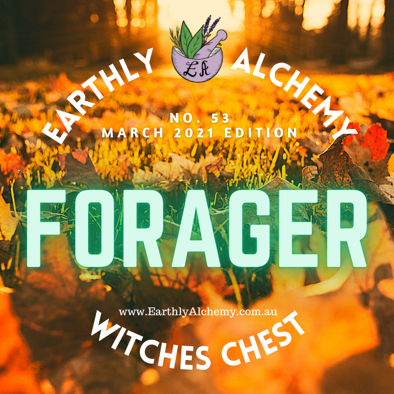 March 2021 <FORAGER >  Witches Chest no. 53