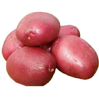 VEG【蔬菜】红马铃薯 一份 / 5pcs~1.5lbs