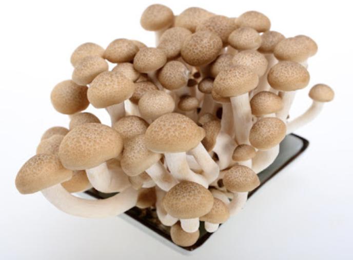 VEG【蔬菜】棕色伞菇 ~150g