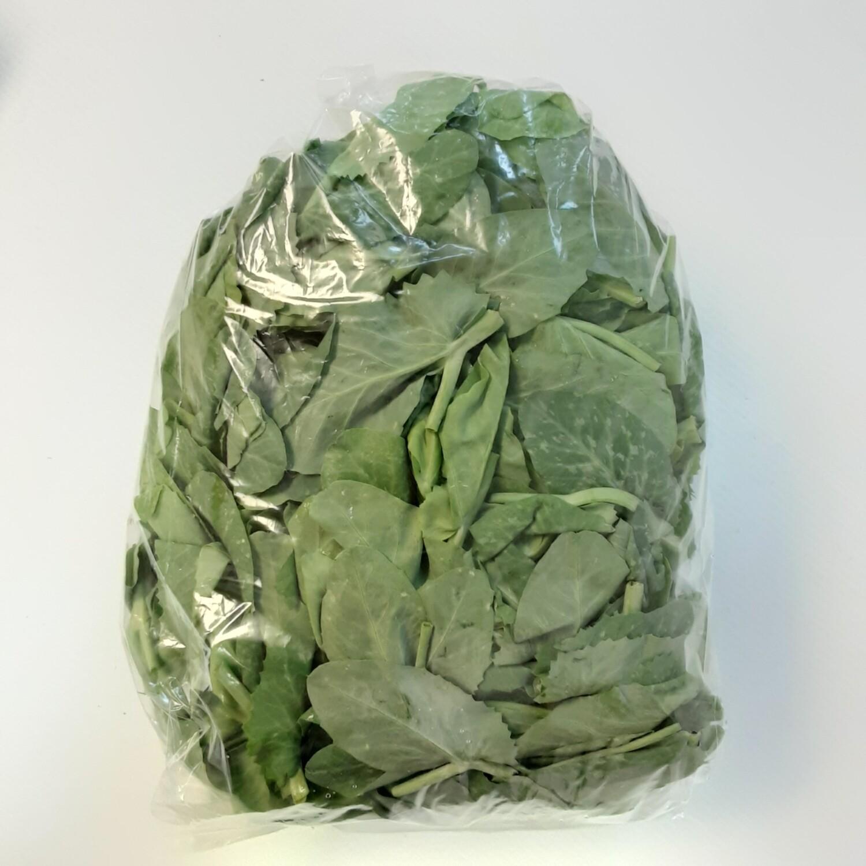 VEG【蔬菜】豆苗 ~1LB