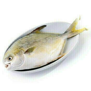 SEAF【海鲜】金鲳鱼  1只