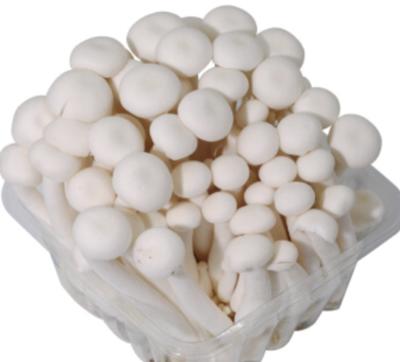 白玉菇 ~150g Freshmore White Beech Mushroom ~150g