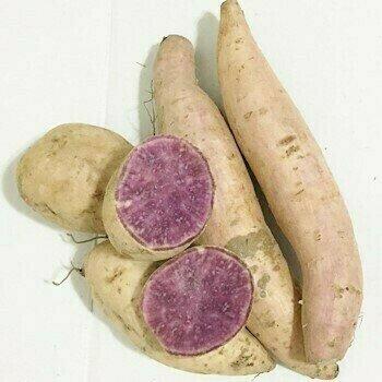 紫地瓜 Purple Yam ~1lb