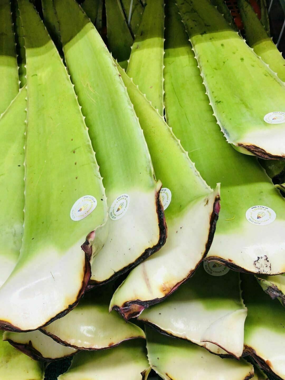 芦荟~1条 Aloe 1pc