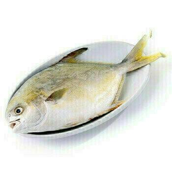 金鲳鱼  1只 Golden Pompano USA Wild Caught / ea