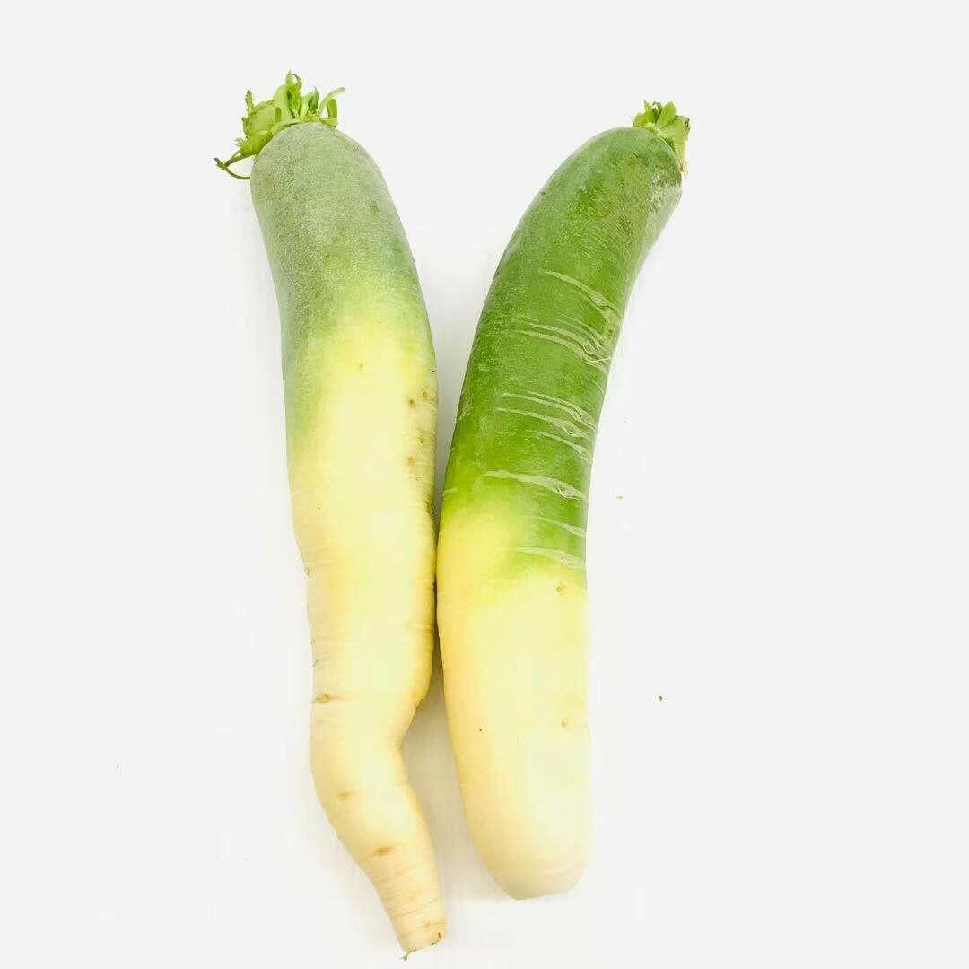 VEG【蔬菜】青萝卜1份 ~约2lbs