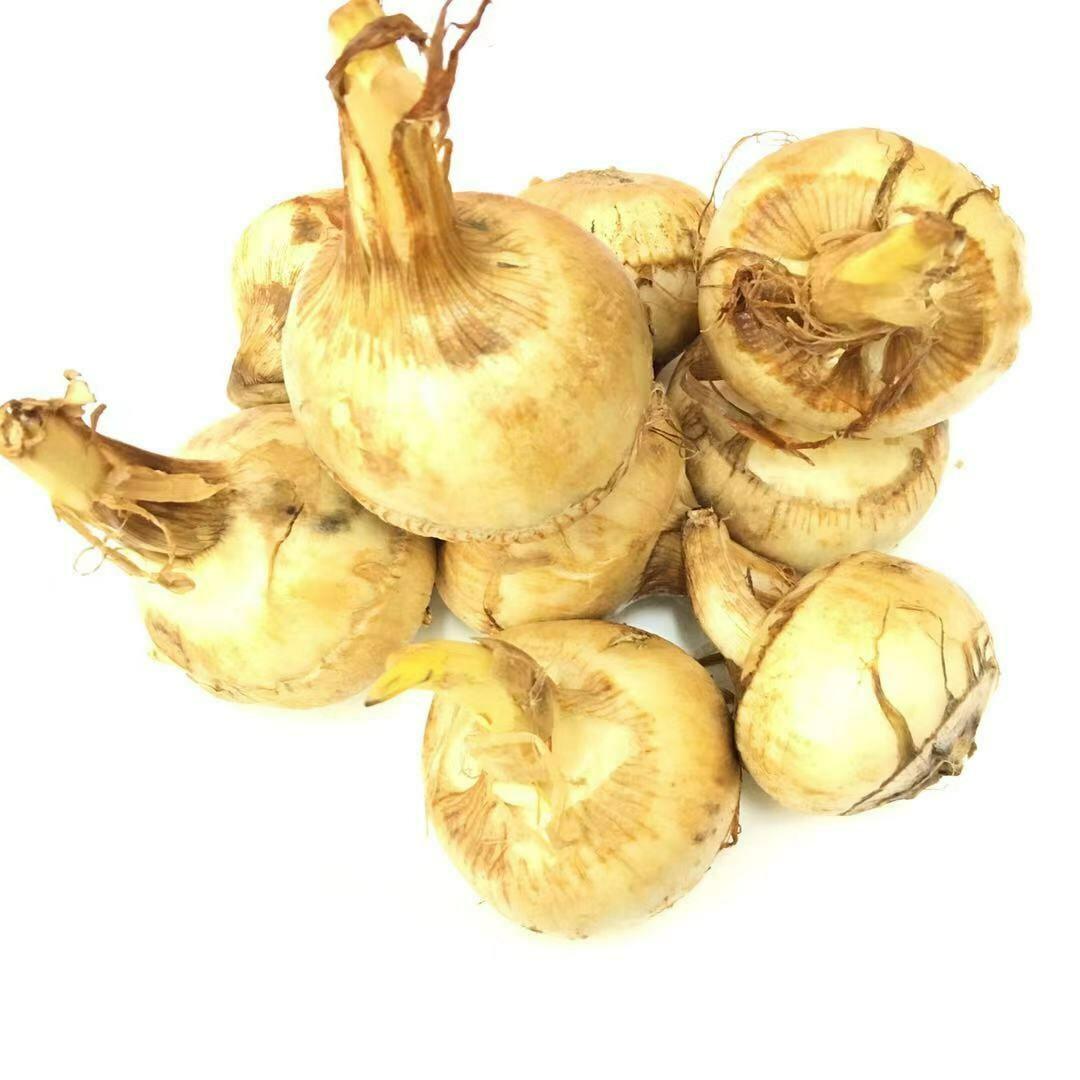 VEG【蔬菜】慈菇 ~2lbs