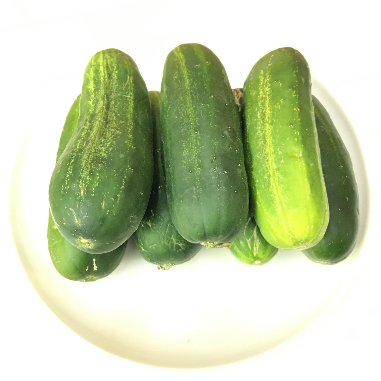 VEG【蔬菜】小黄瓜 ~约2lbs
