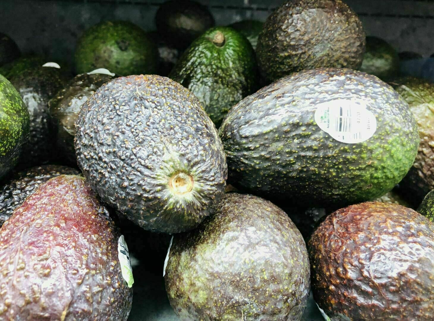 特大牛油果~1个Avocado XLarge 1pc