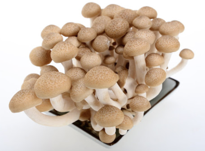 蟹味菇 ~150g Brown Beech Mushroom ~150g