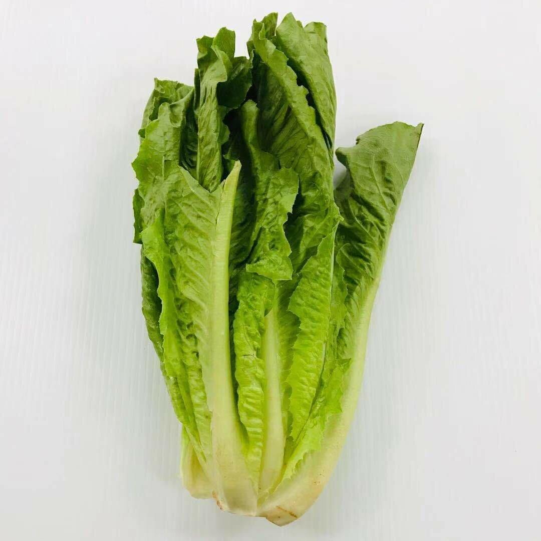 VEG【蔬菜】直身生菜 1pc