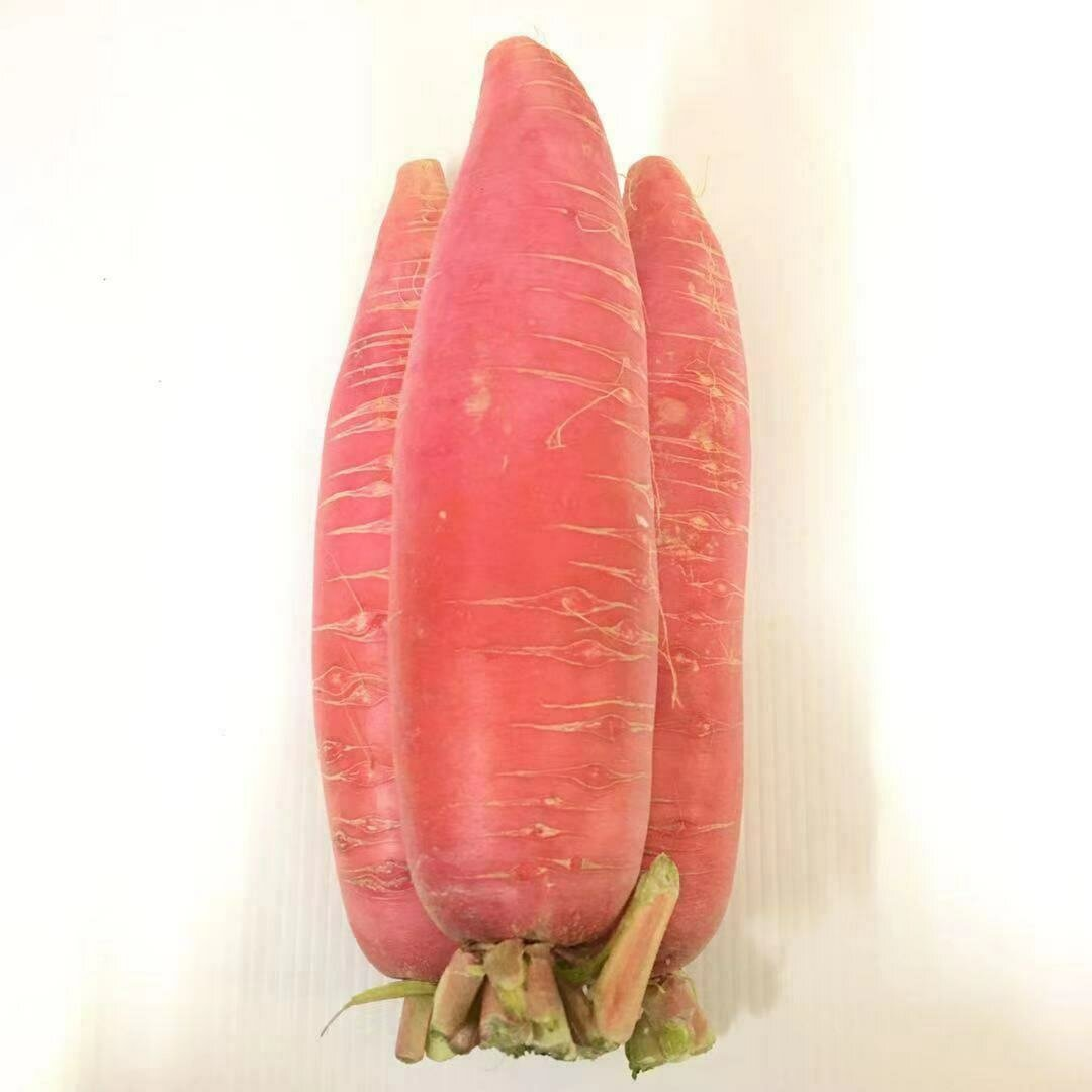 VEG【蔬菜】红皮萝卜1份 ~约2lbs
